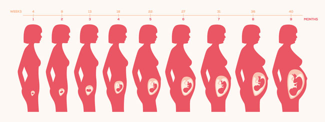 Unborn Baby Growth Chart
