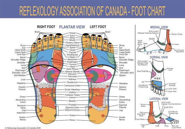 reflexology massage chart